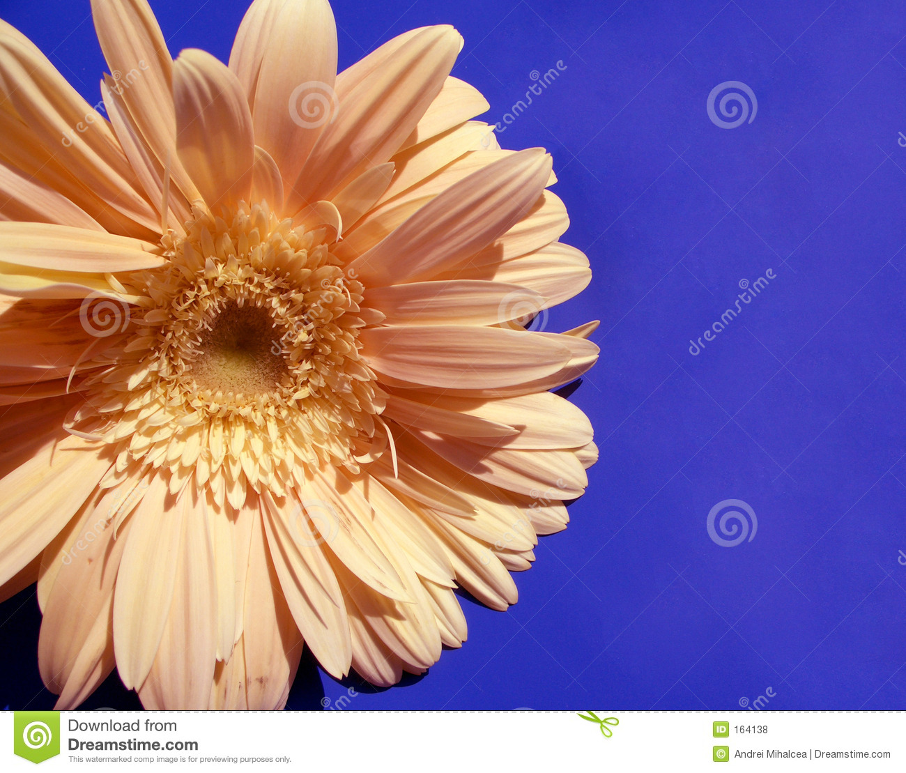 Download Sun-flower...(3) stock photo. Image of tender, flowers - 164138
