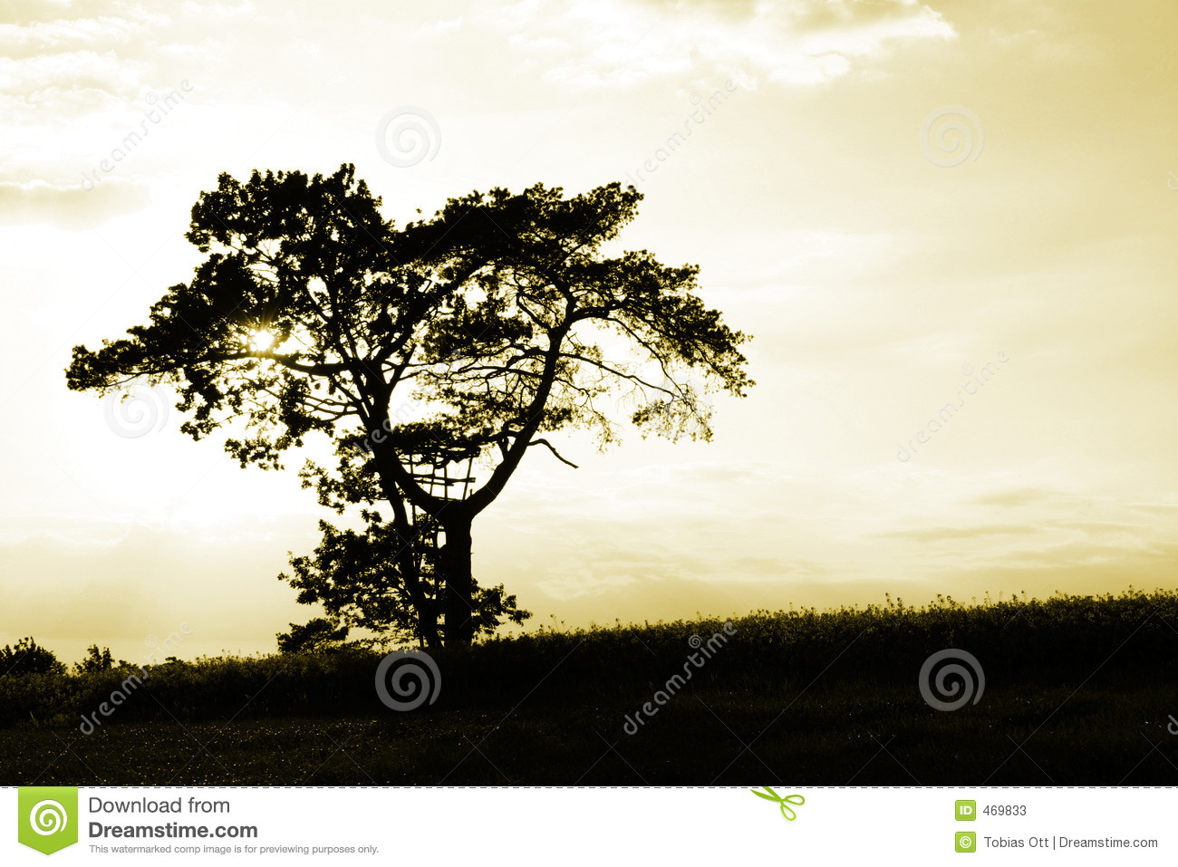 Download When the sun goes down stock image. Image of down, flora - 469833