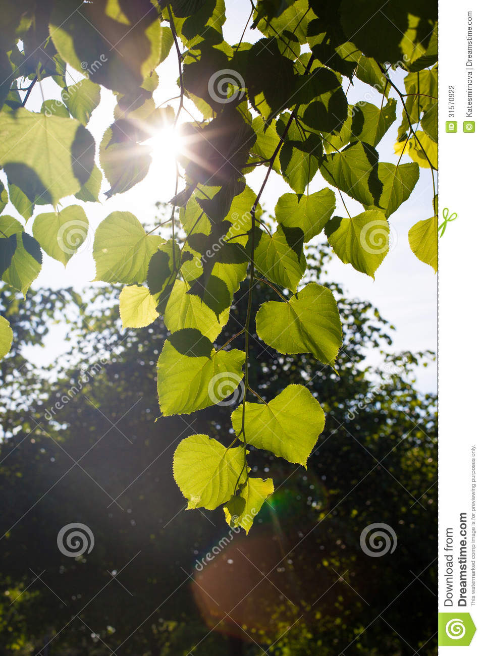 Sun through the leaves of trees