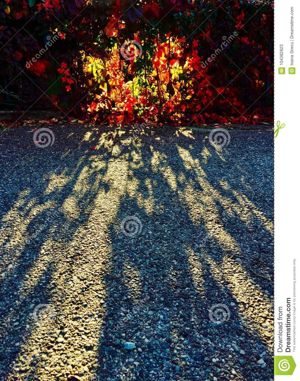 Sun filtering through colored leaves