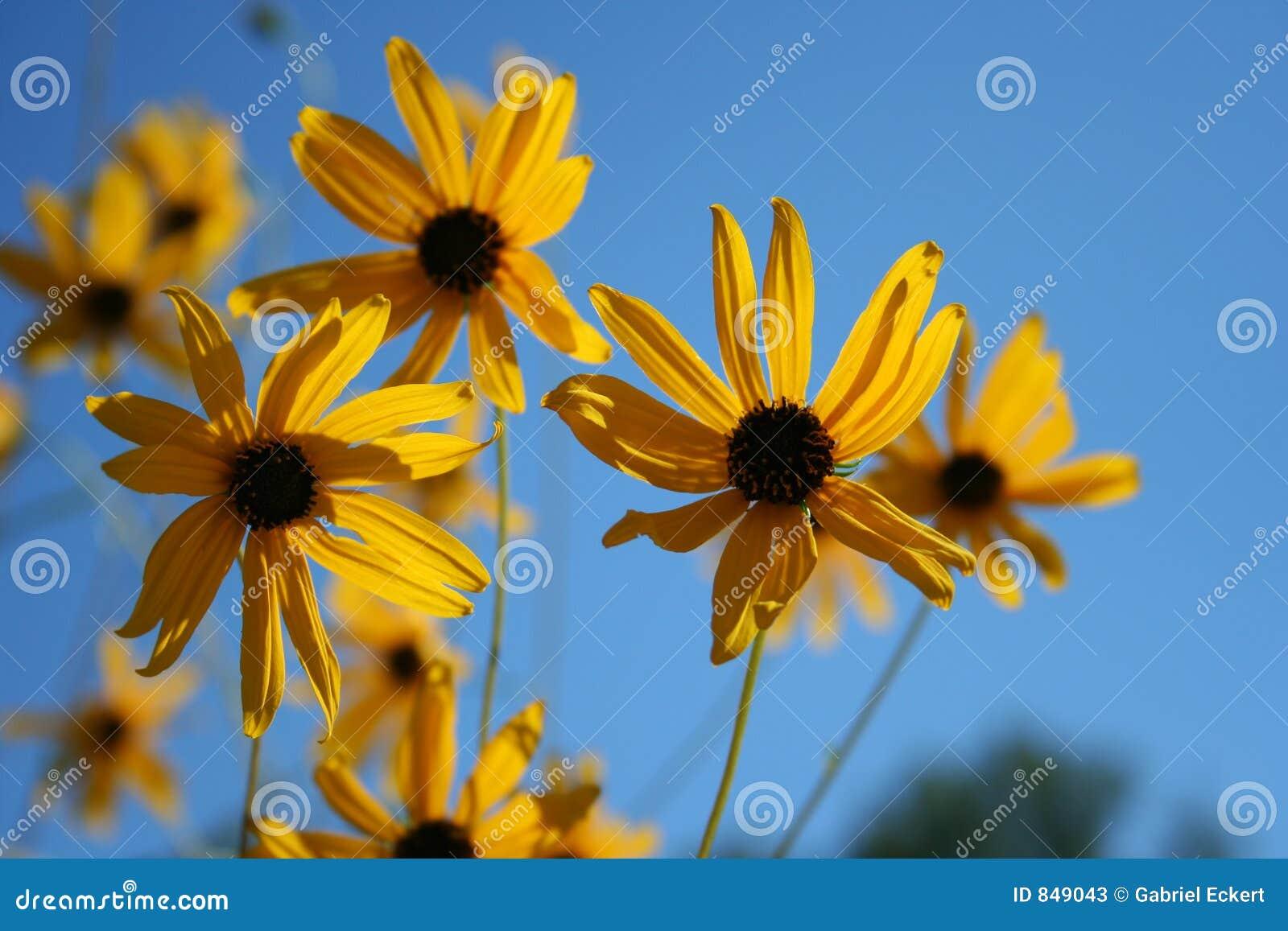 Sun-light flowers