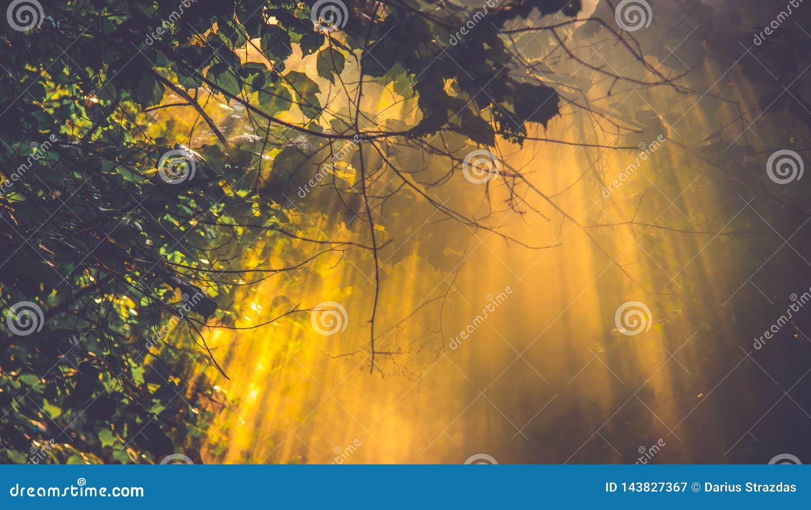 Sun light and mist