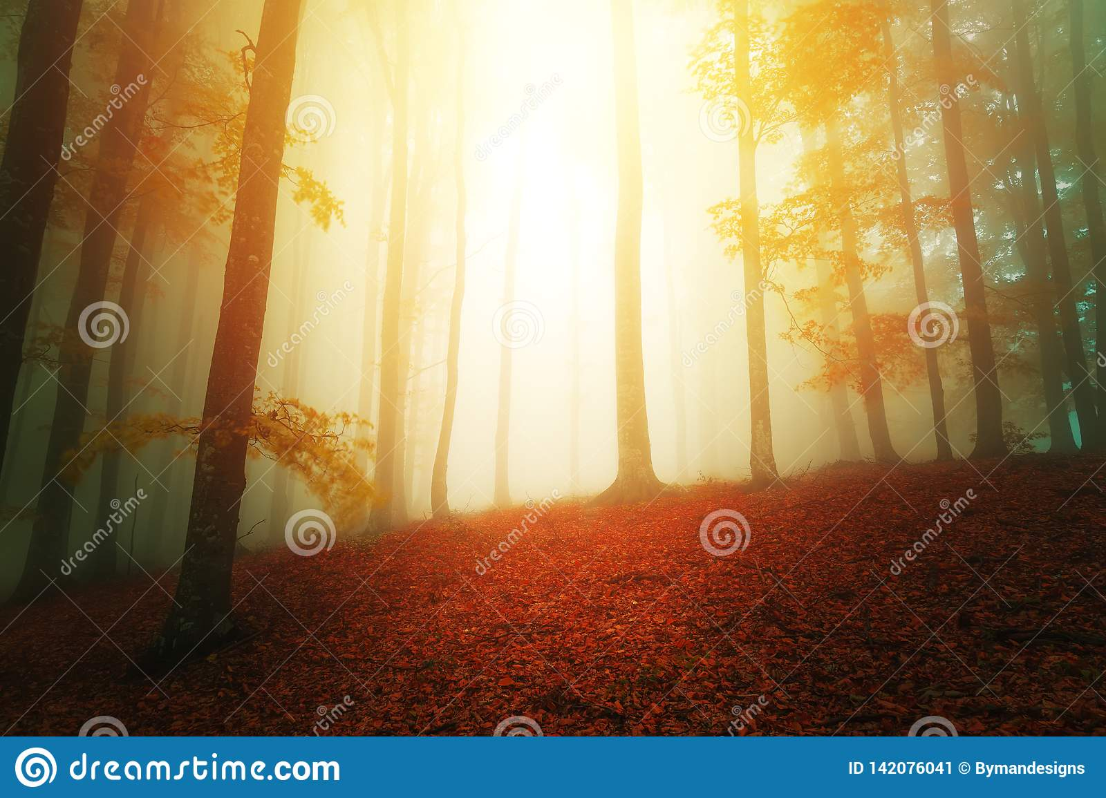 Sun lights in fantasy woods scenery with fog between trees