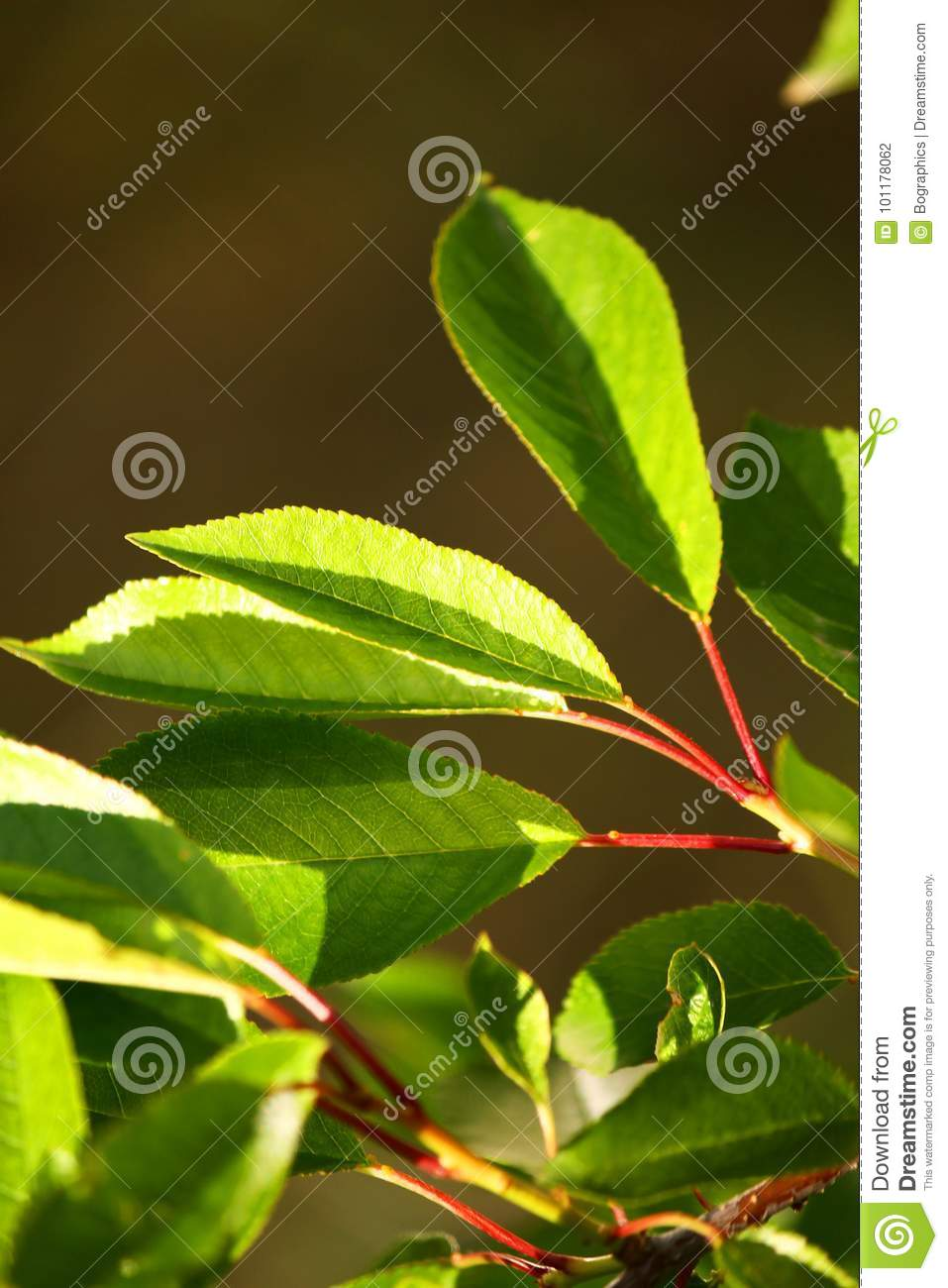 Sun-lit small green leaves on blurred background