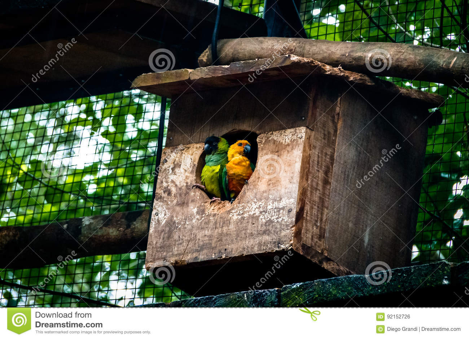 Sun Parakeet and Nanday Parakeet Couple at Parque das Aves - Foz do Iguacu, Parana, Brazil