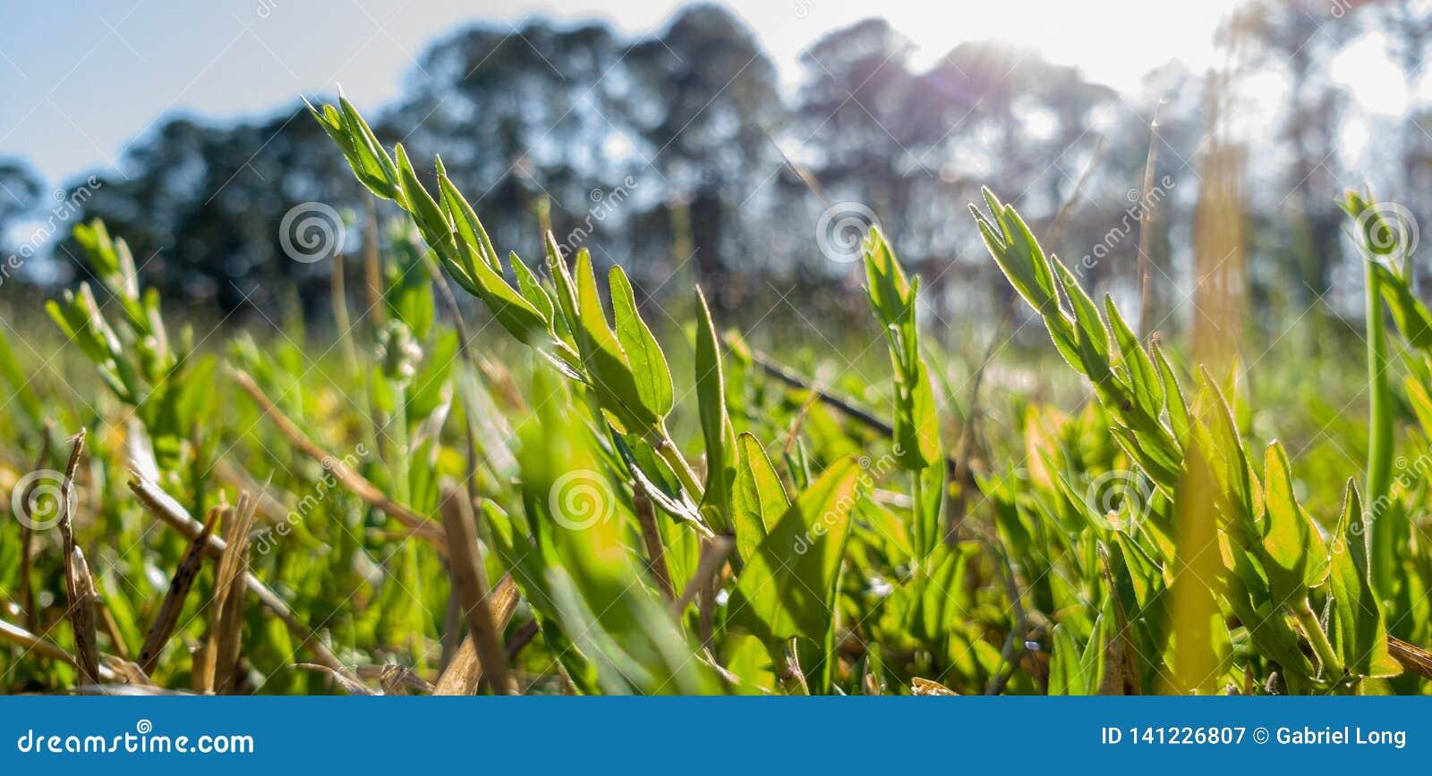 Sun perfurando em um prado da grama e das flores