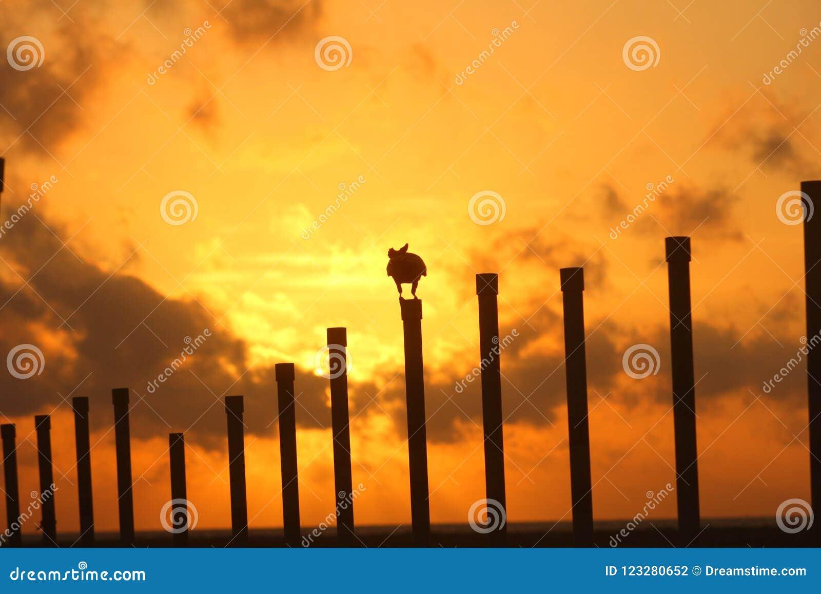 Sun a placé avec la corneille de jungle, Écorchure-visage, Sri Lanka,
