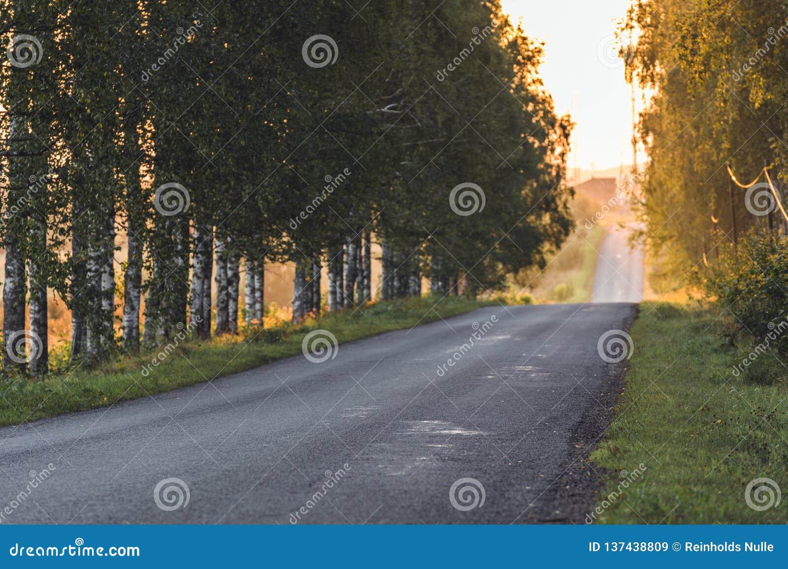 Sun que brilla en el extremo del camino con el callejón del abedul además de él - a Sunny Summer Day, hora de oro, borrosa en par