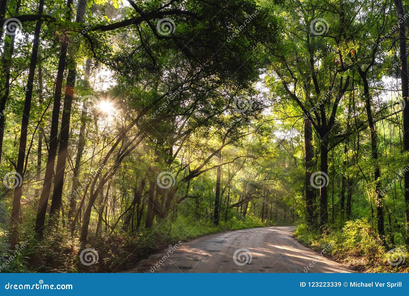 Sun que brilla a través del bosque en Carolina del Sur