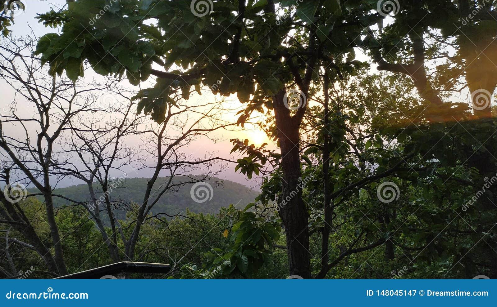 Sun que sneaking atrás das árvores