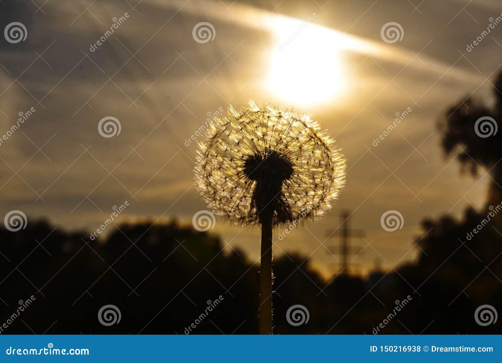 Sun que sube de la tierra