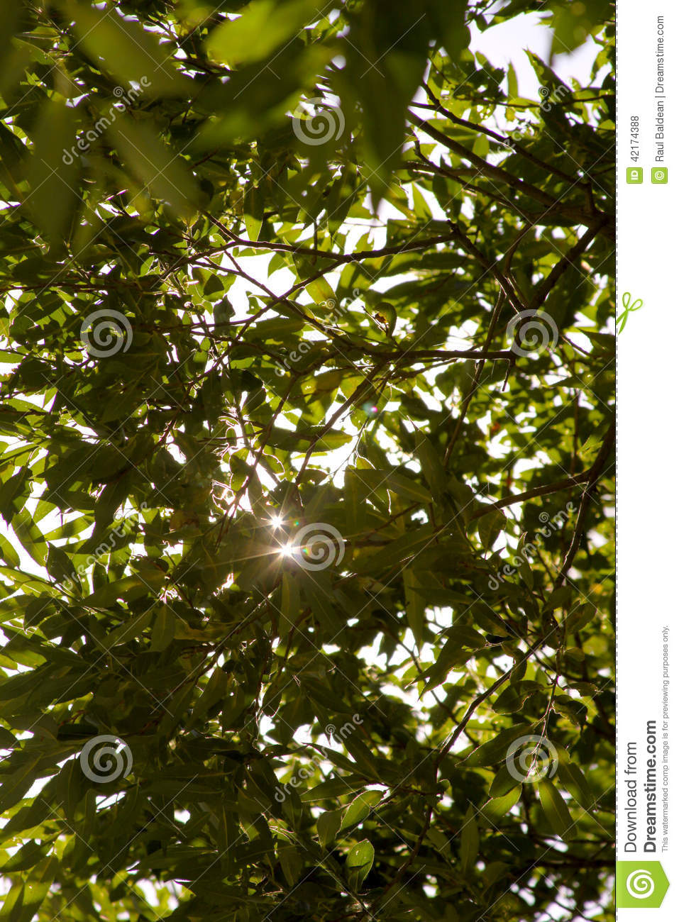 Sun rays through leaves of the trees