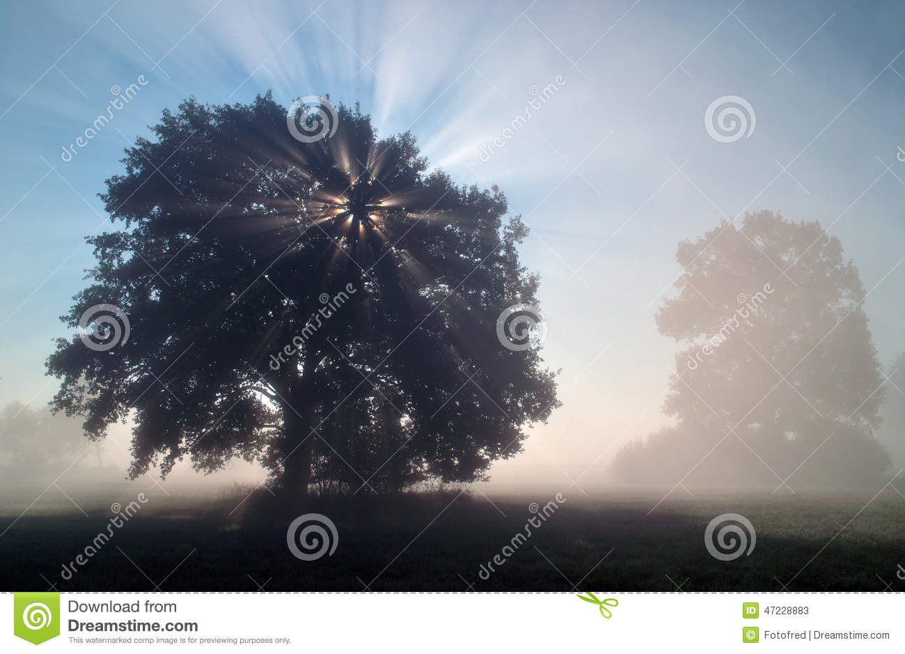 Sun rays in the misty morning