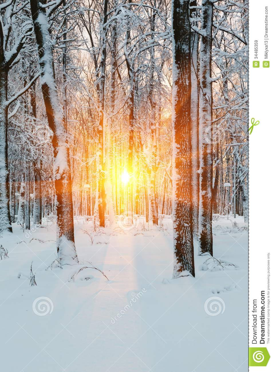 suns rays winter dawn in the forest royalty free stock