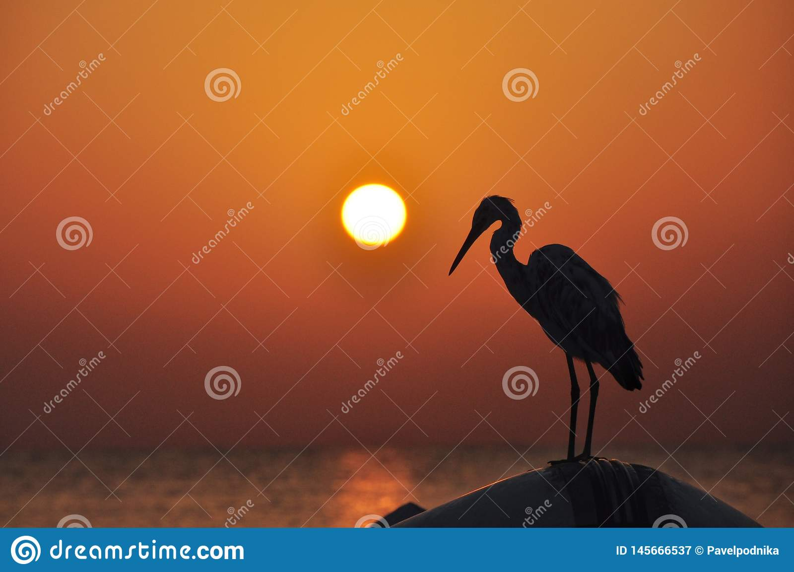 The sun setting over the horizon of the sea playing on the waves of the sea and the bird sitting on the boat