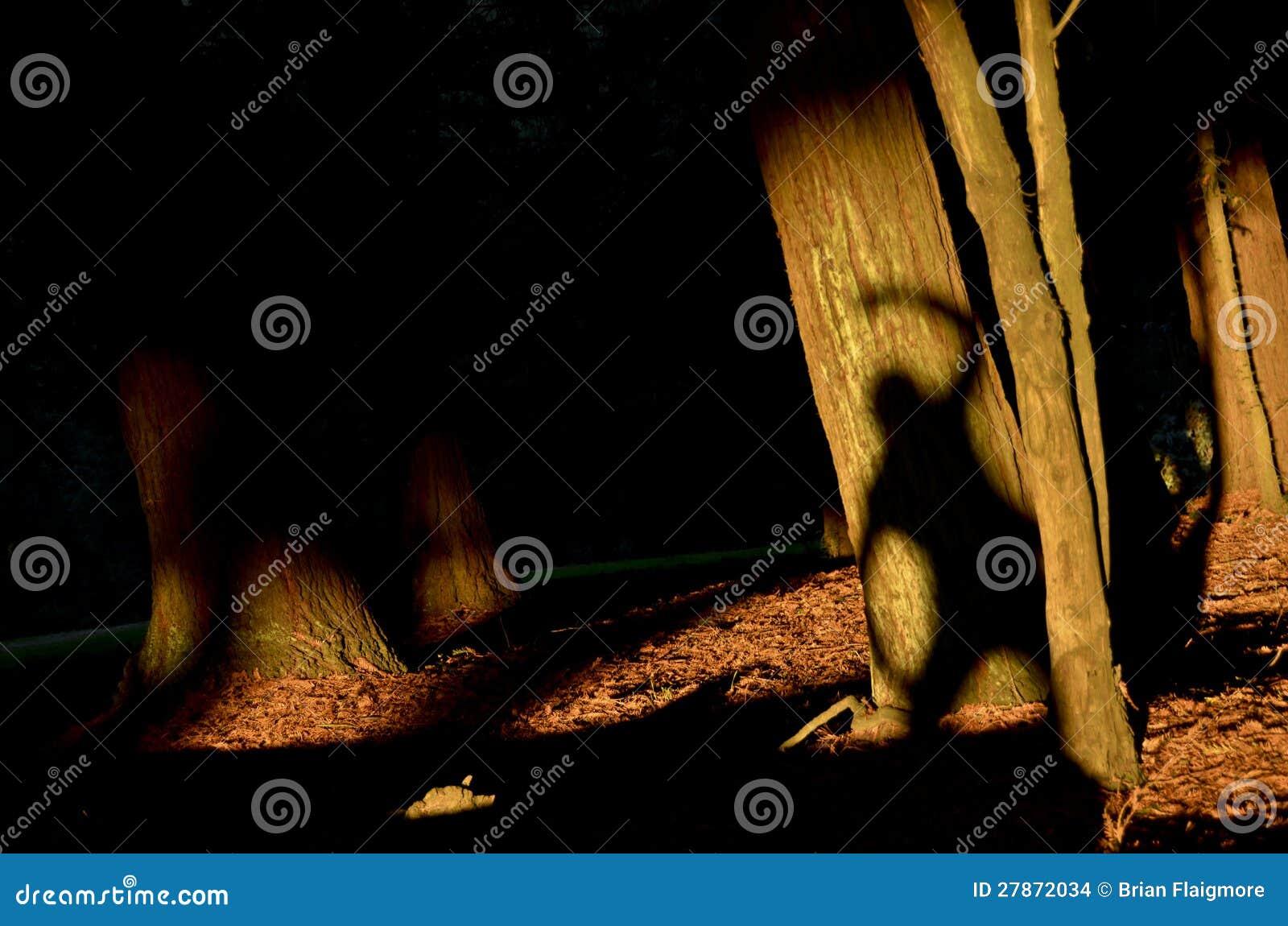 Sun Shadow Tree