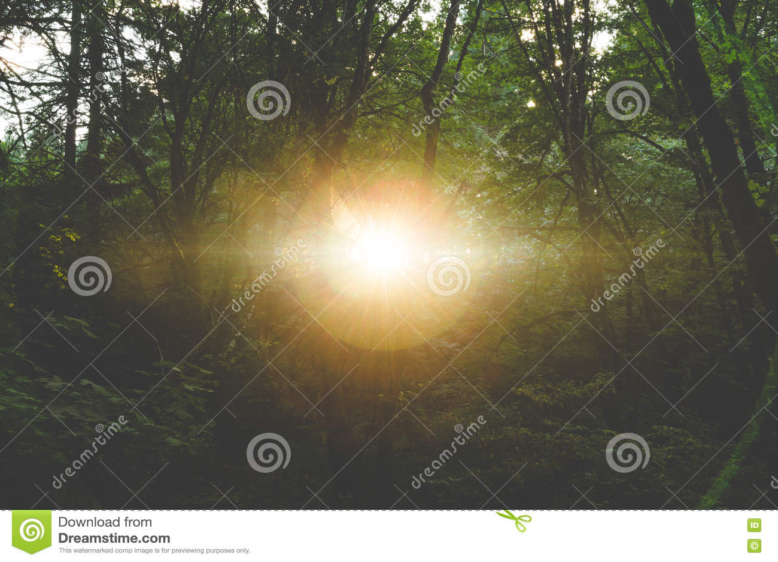 Sun shining through the dark forest