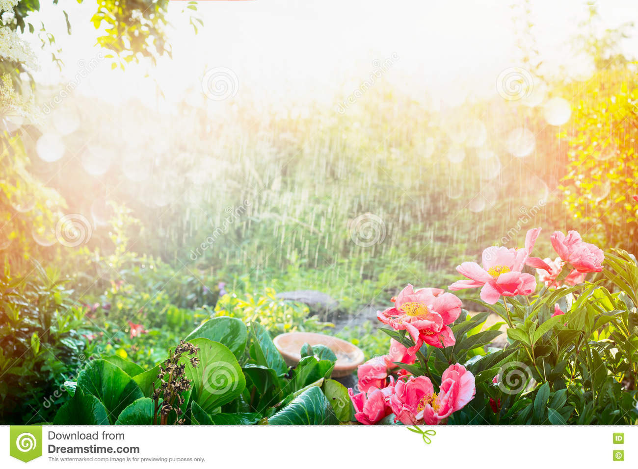 sunlight on the garden Find morning sunlight on tree garden background stock images in hd and  millions of other royalty-free stock photos, illustrations, and vectors in the.
