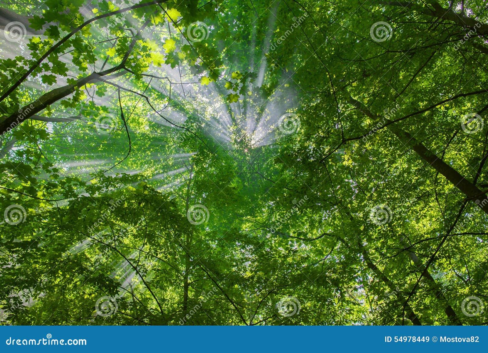 Sun strålar till och med treesna