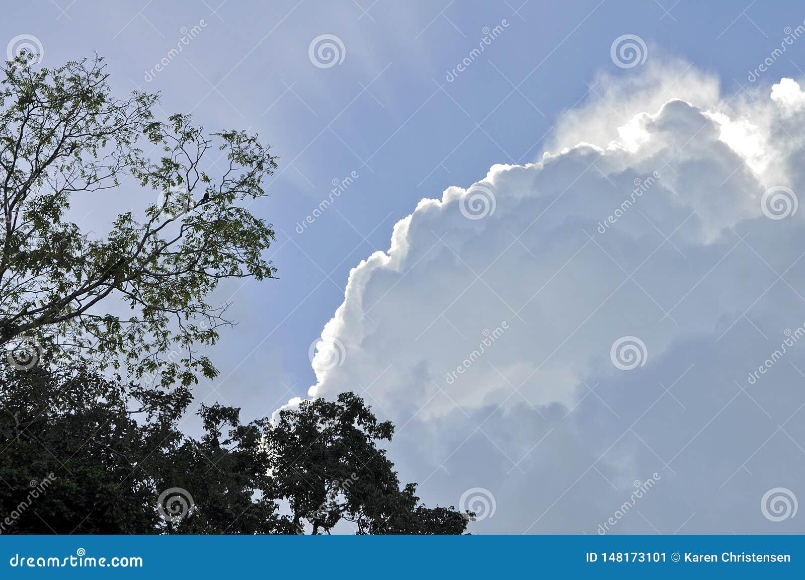 Sun-Strahlen von den Kumulus-Wolken