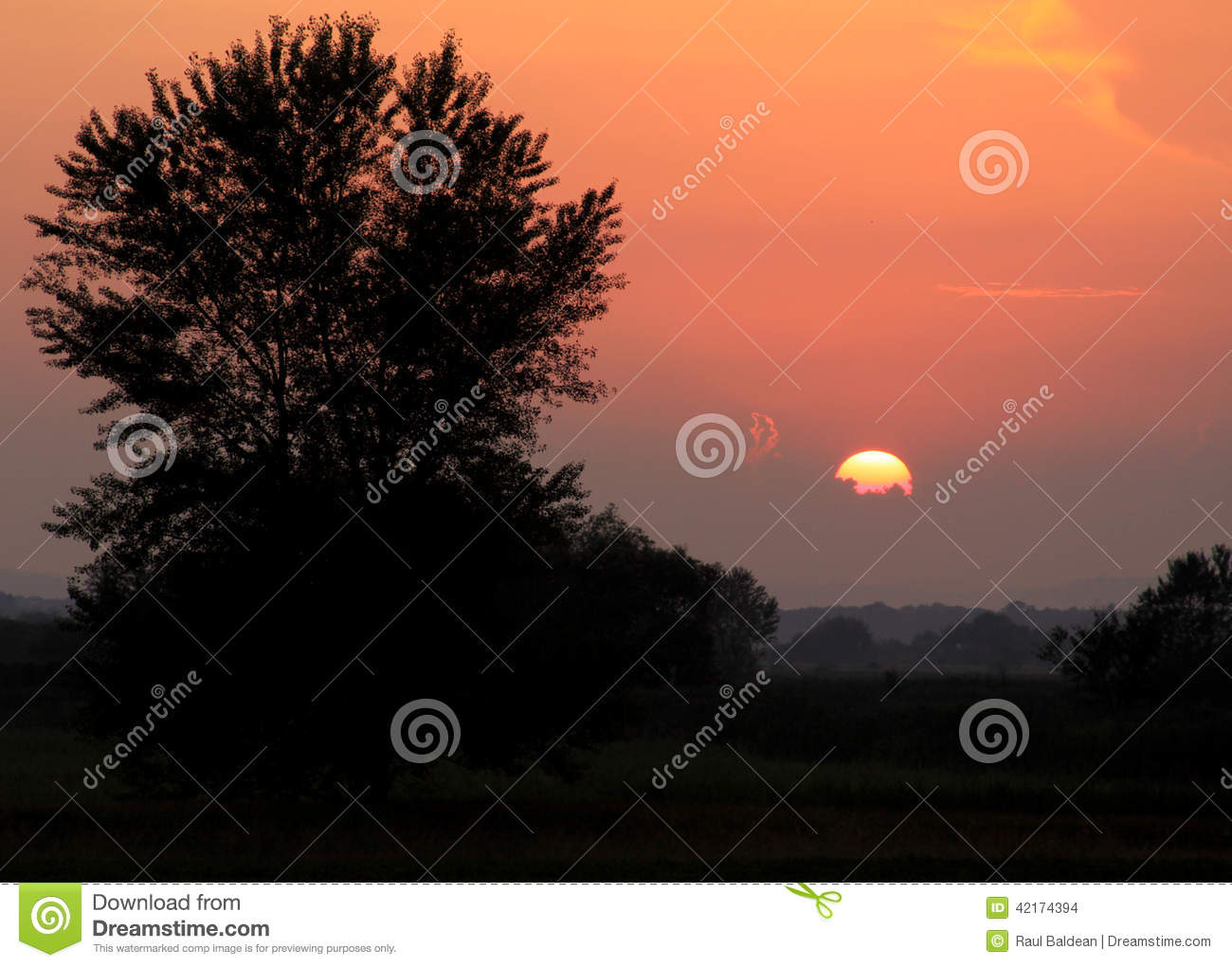 Sun at sunset with tree