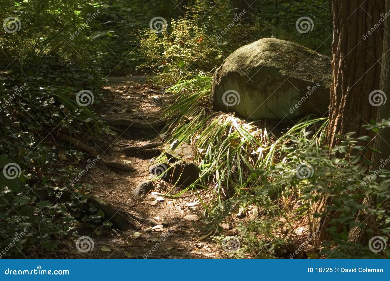 Sun sur la voie et la roche