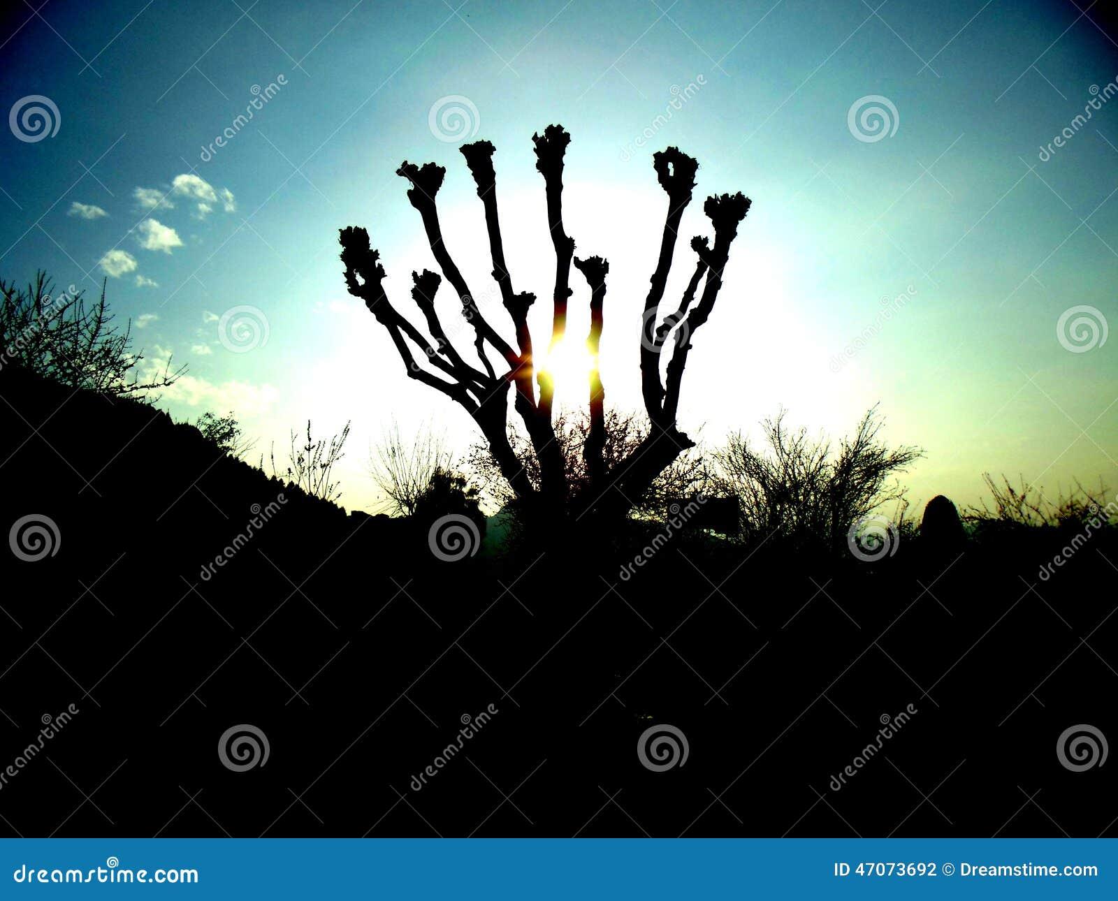 Sun in un albero