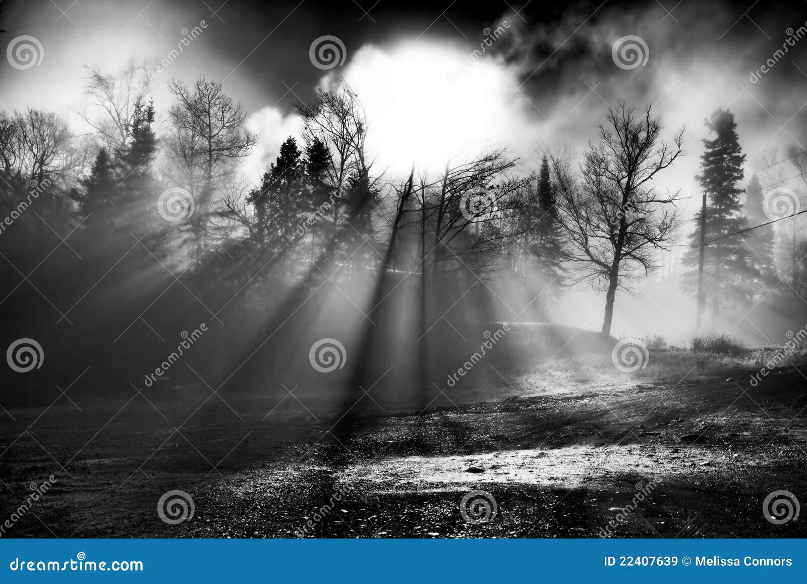 Sunbeamstrees