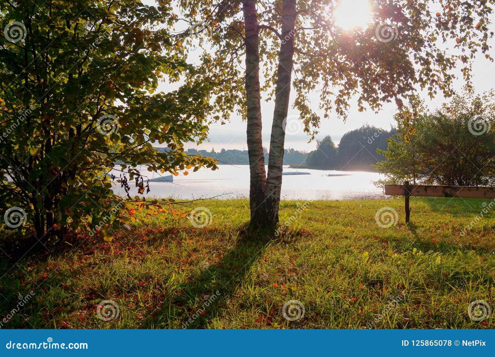 Sunburst através de uma árvore perto de um lago tranquilo