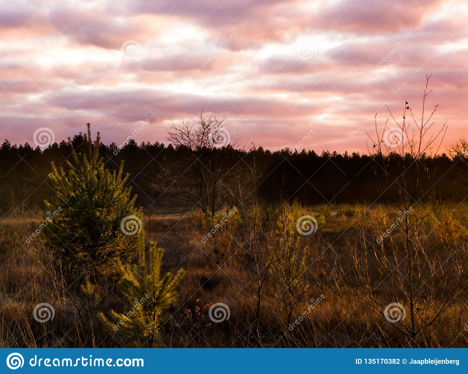 Sundown in a heather landscape with nacreous clouds, a colorful weather phenomenon that rarely occurs in winter