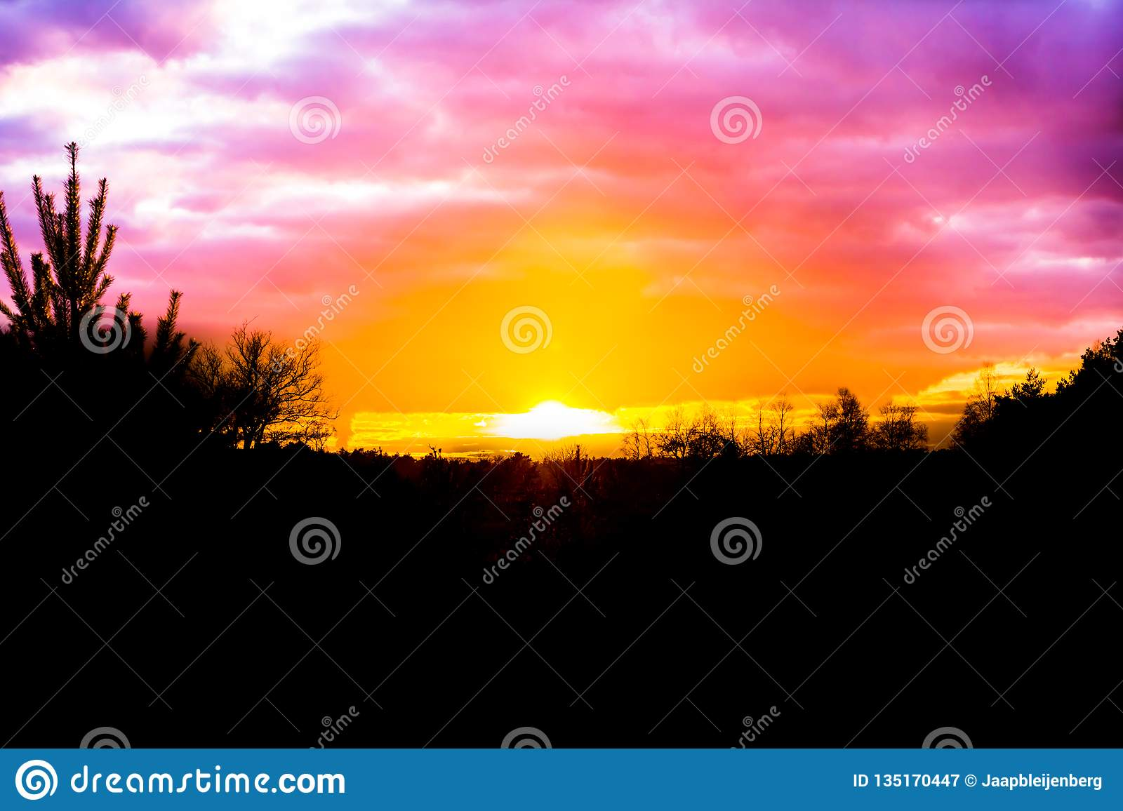 Sundown in a heather landscape with pink nacreous clouds, a rare and colorful weather effect in the sky