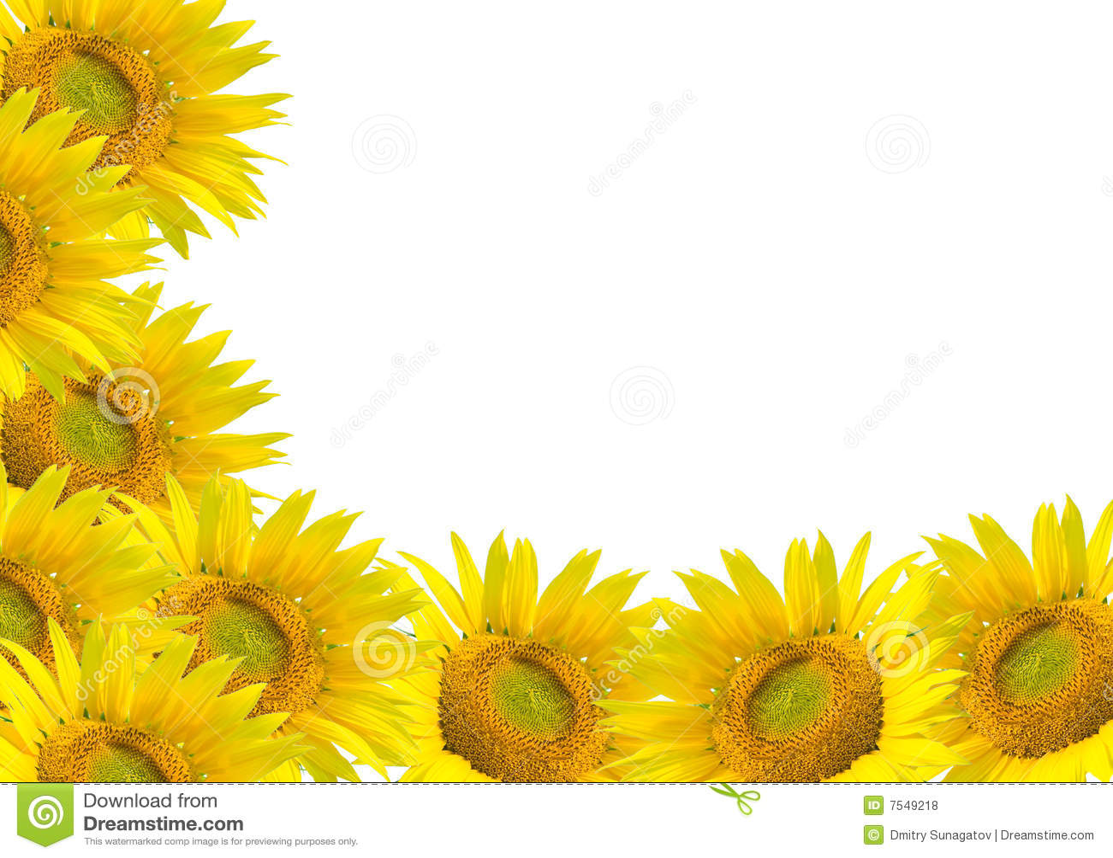 sunflower field wallpaper