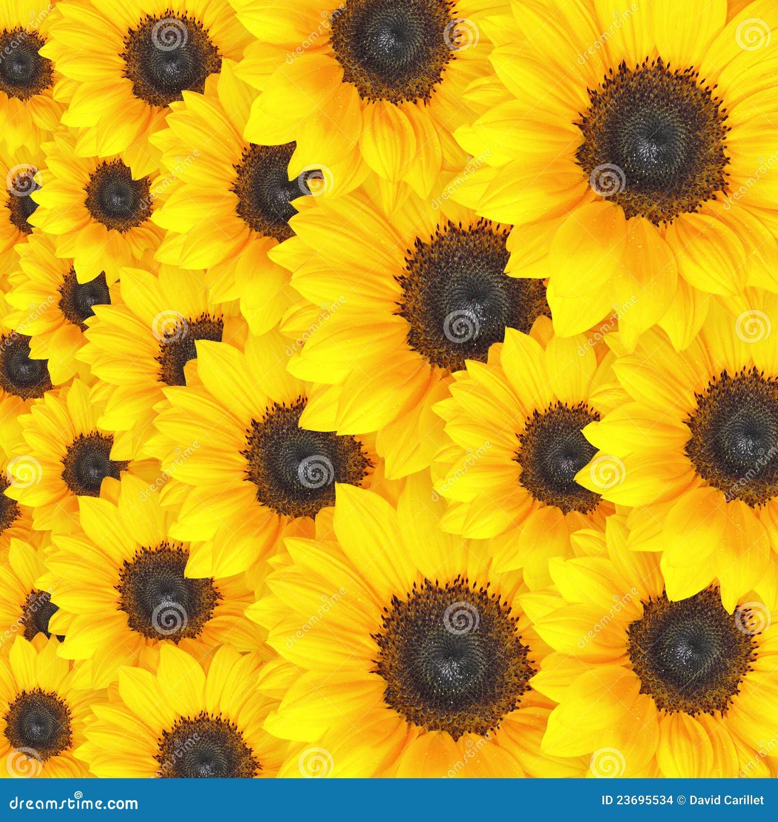 Sunflower Background Pattern Stock Photo
