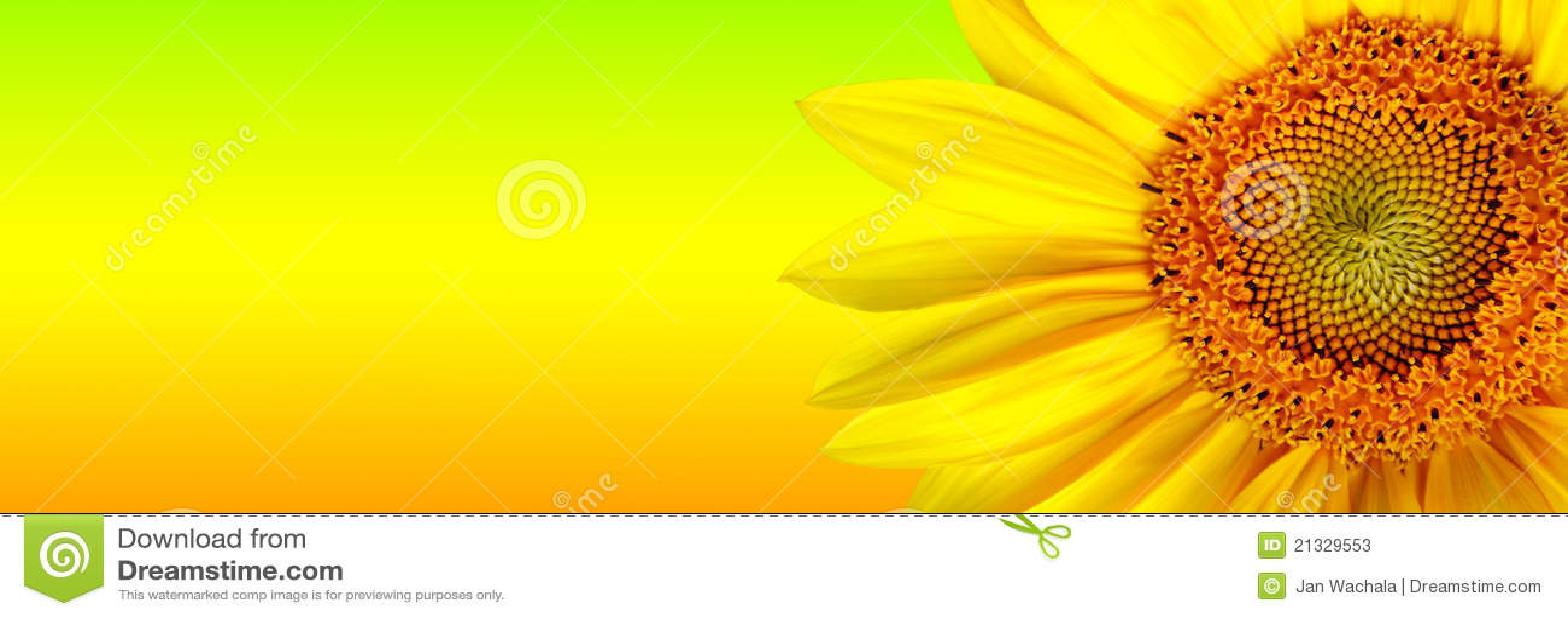Sunflower banner stock illustration. Illustration of spot ...