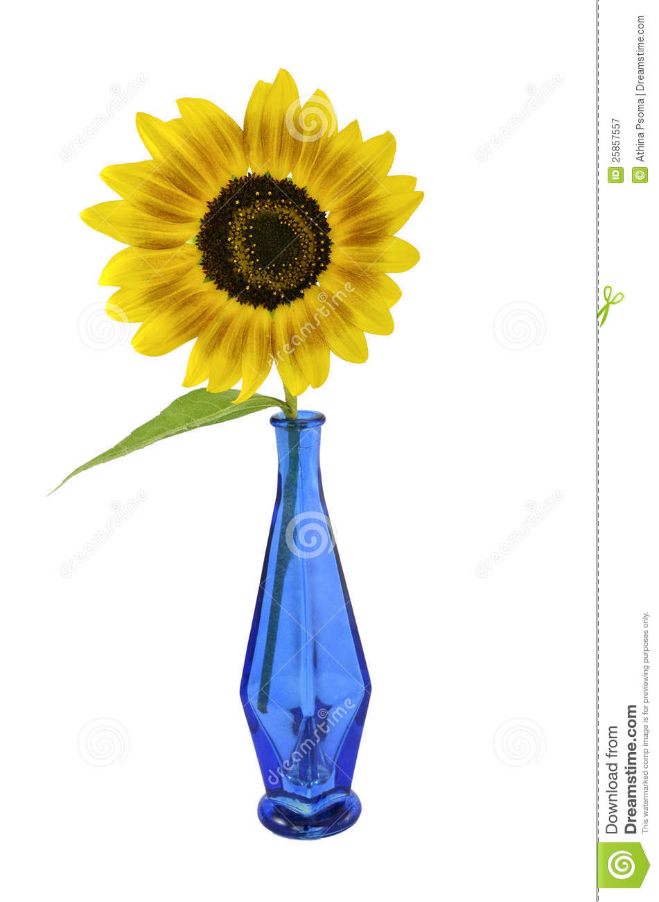 Sunflower In Vase Drawing