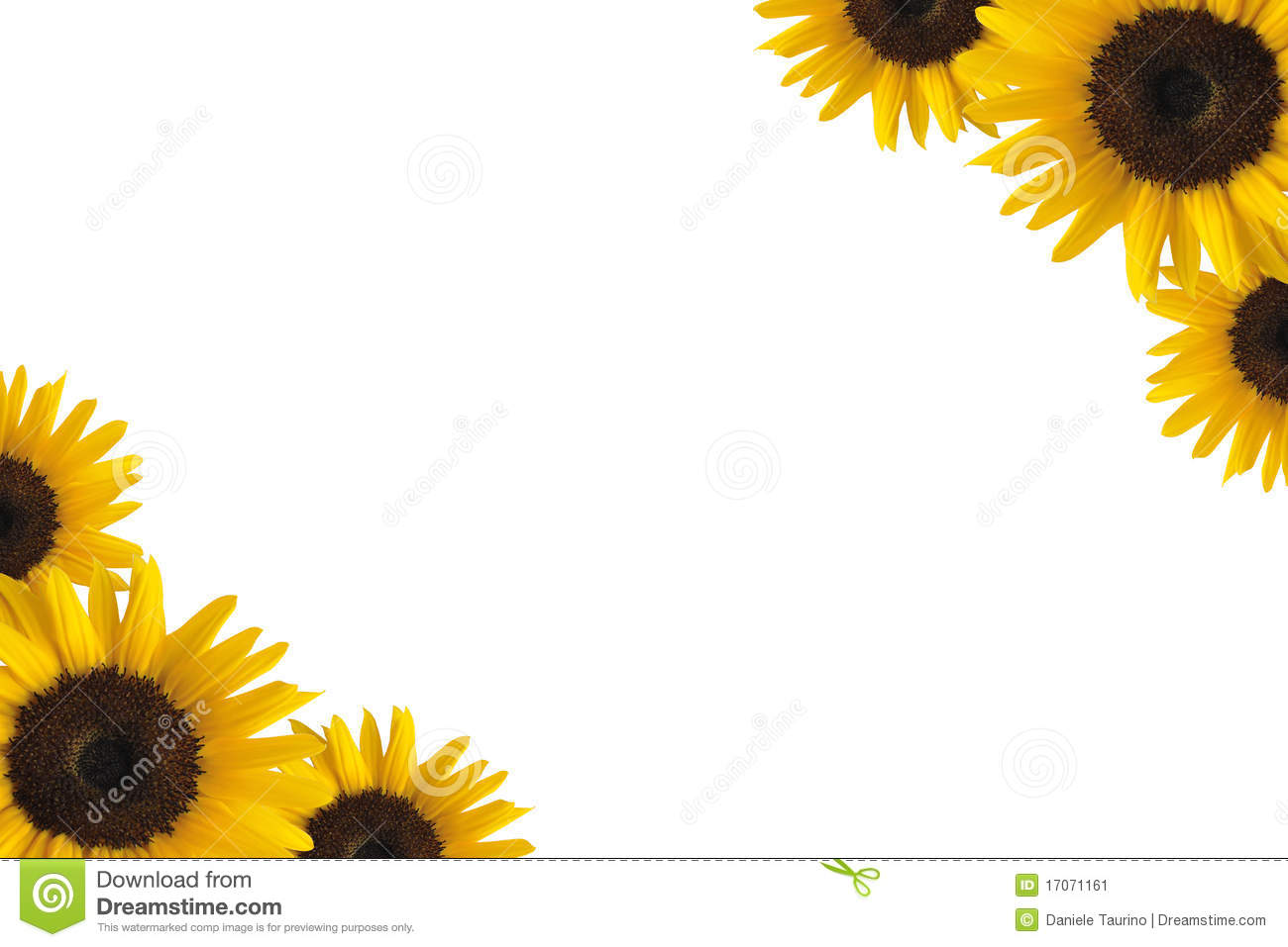 Sunflower Border Stock Image Image 17071161