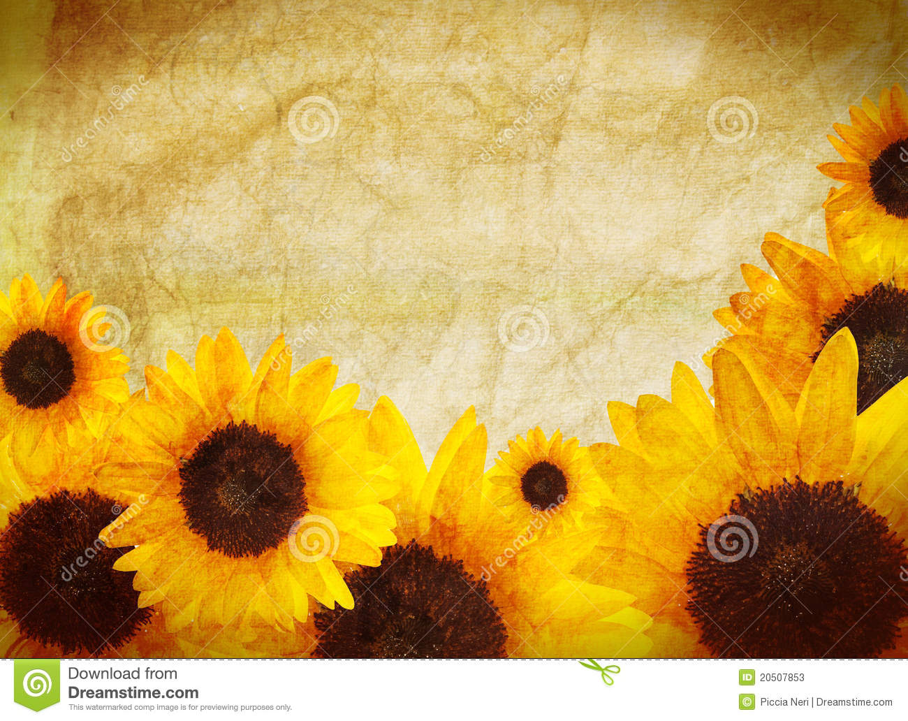 Sunflower Border Stock Photos - Image: 20507853