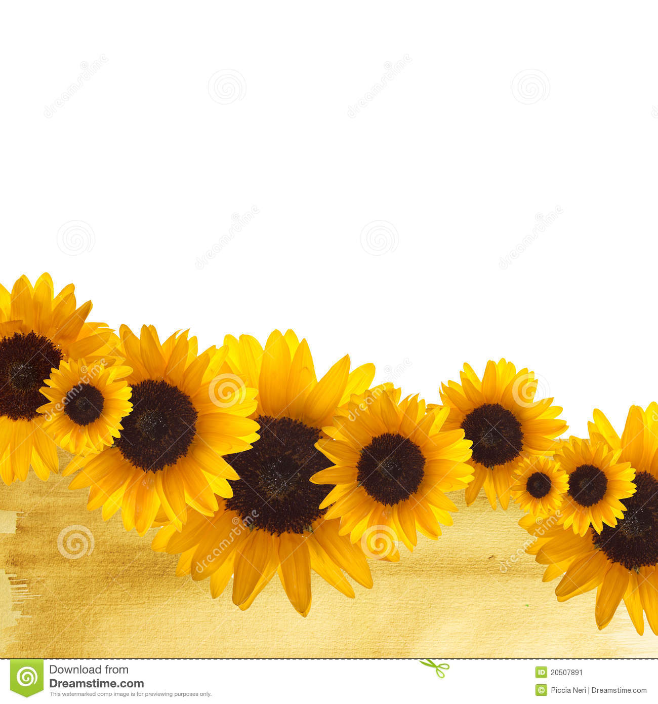 clip art borders sunflowers - photo #46