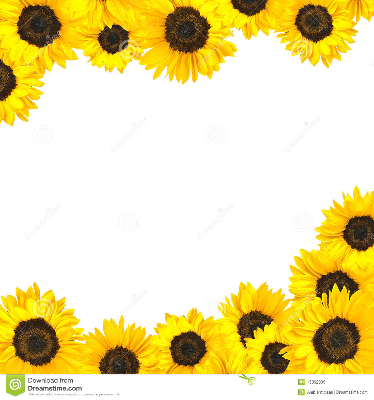 Sunflowers Clipart Border Sunflower border isolated on