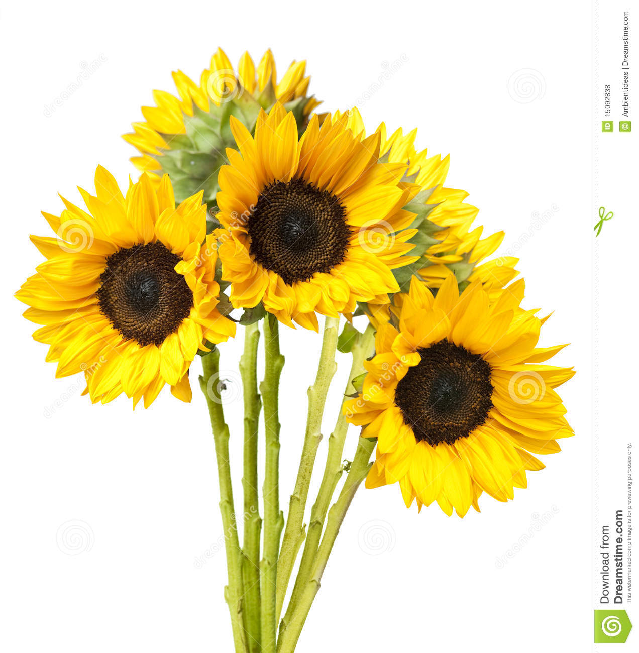 Sunflower Bouquet Isolated On White Royalty Free Stock Photos - Image ...