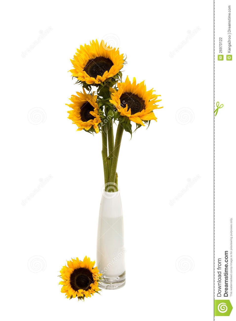 Sunflower Bouquet In White Vase Stock Photo Image 26970122