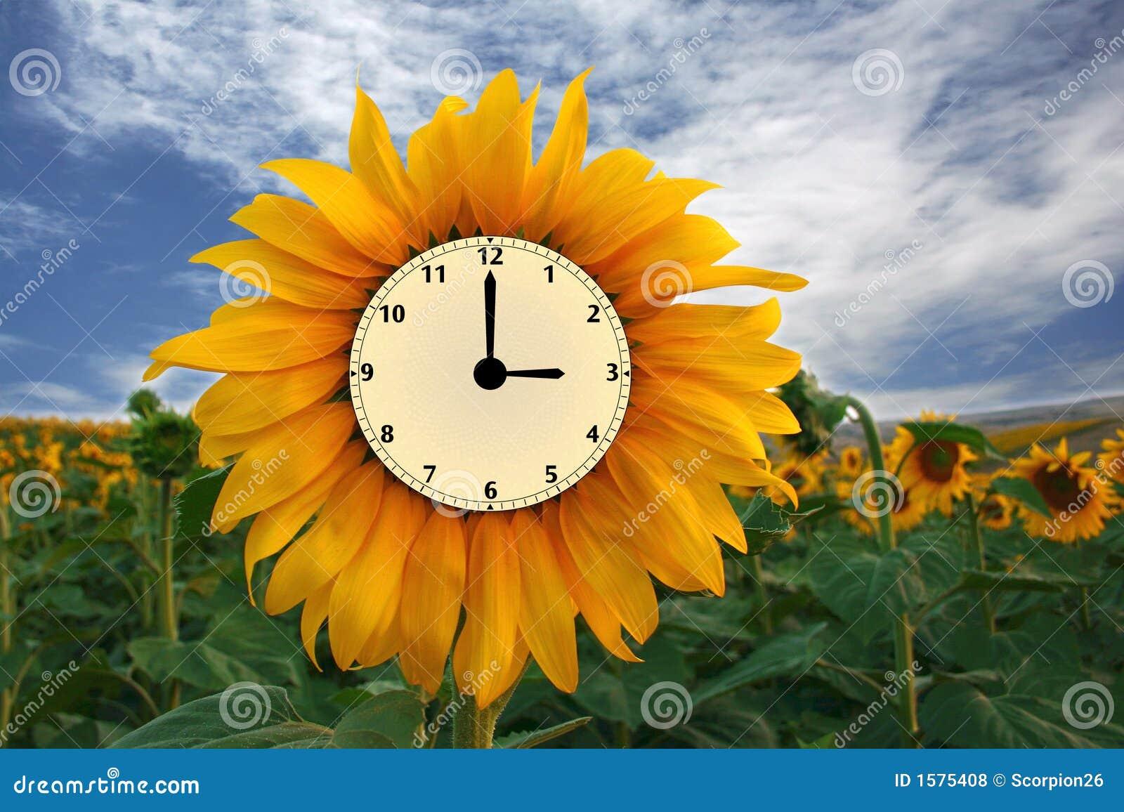 sunflower clock royalty free stock photos image 1575408. Black Bedroom Furniture Sets. Home Design Ideas
