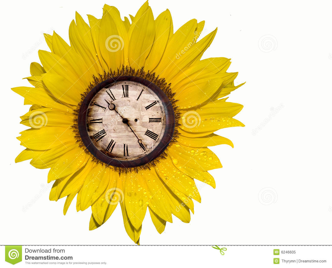 Sunflower with clock