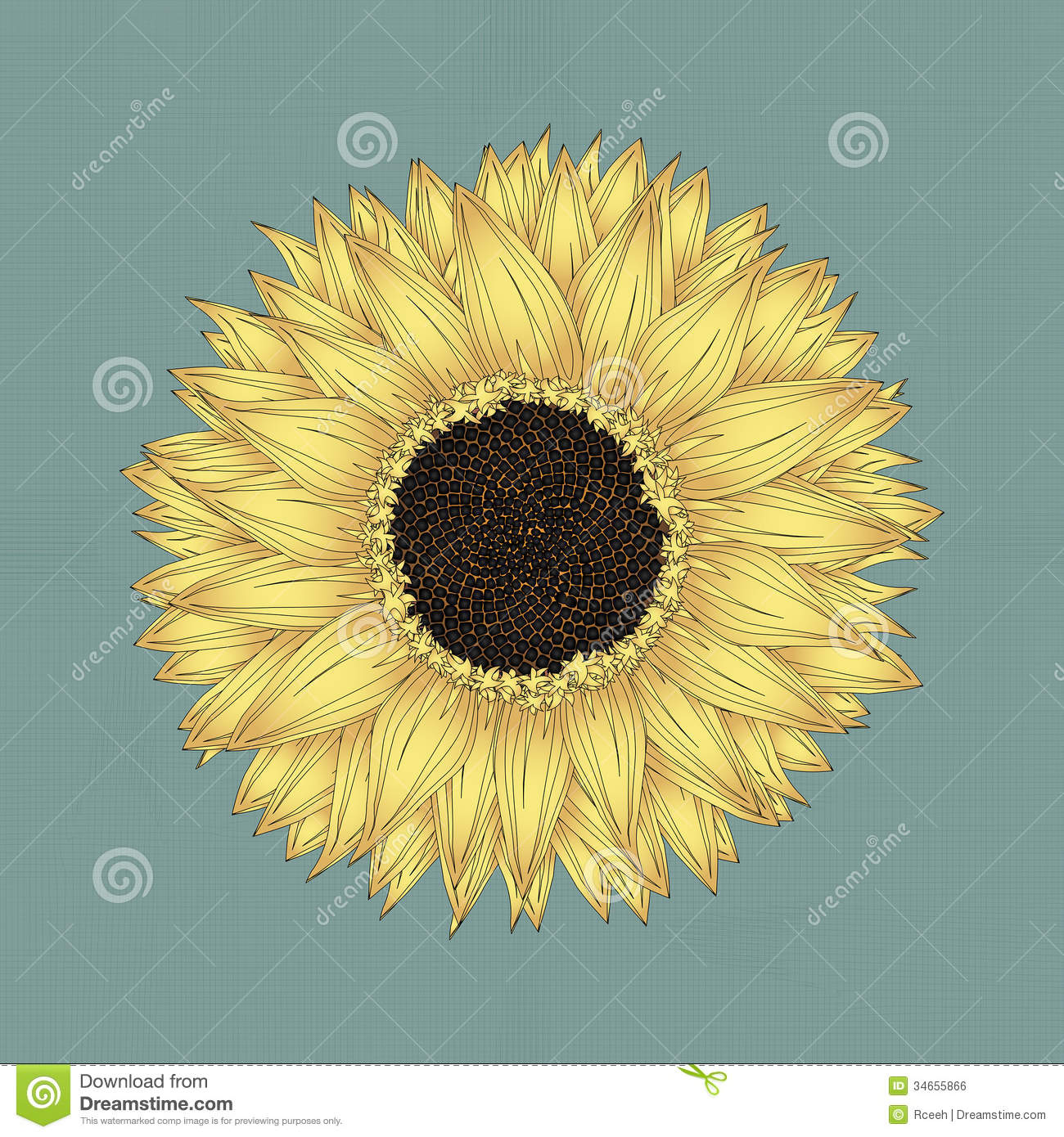 Pendleton (OR) United States  City pictures : Sunflower Drawing Royalty Free Stock Image Image: 34655866