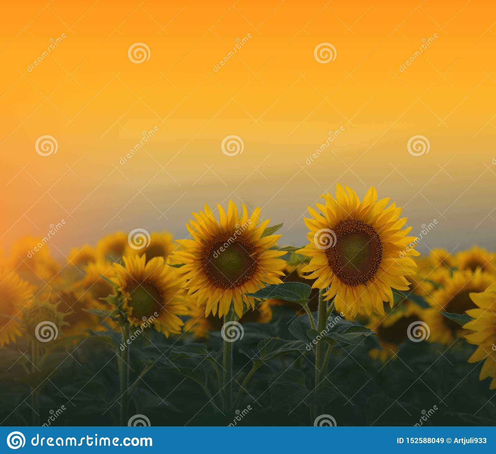 194 594 Artistic Wallpaper Photos Free Royalty Free Stock Photos From Dreamstime