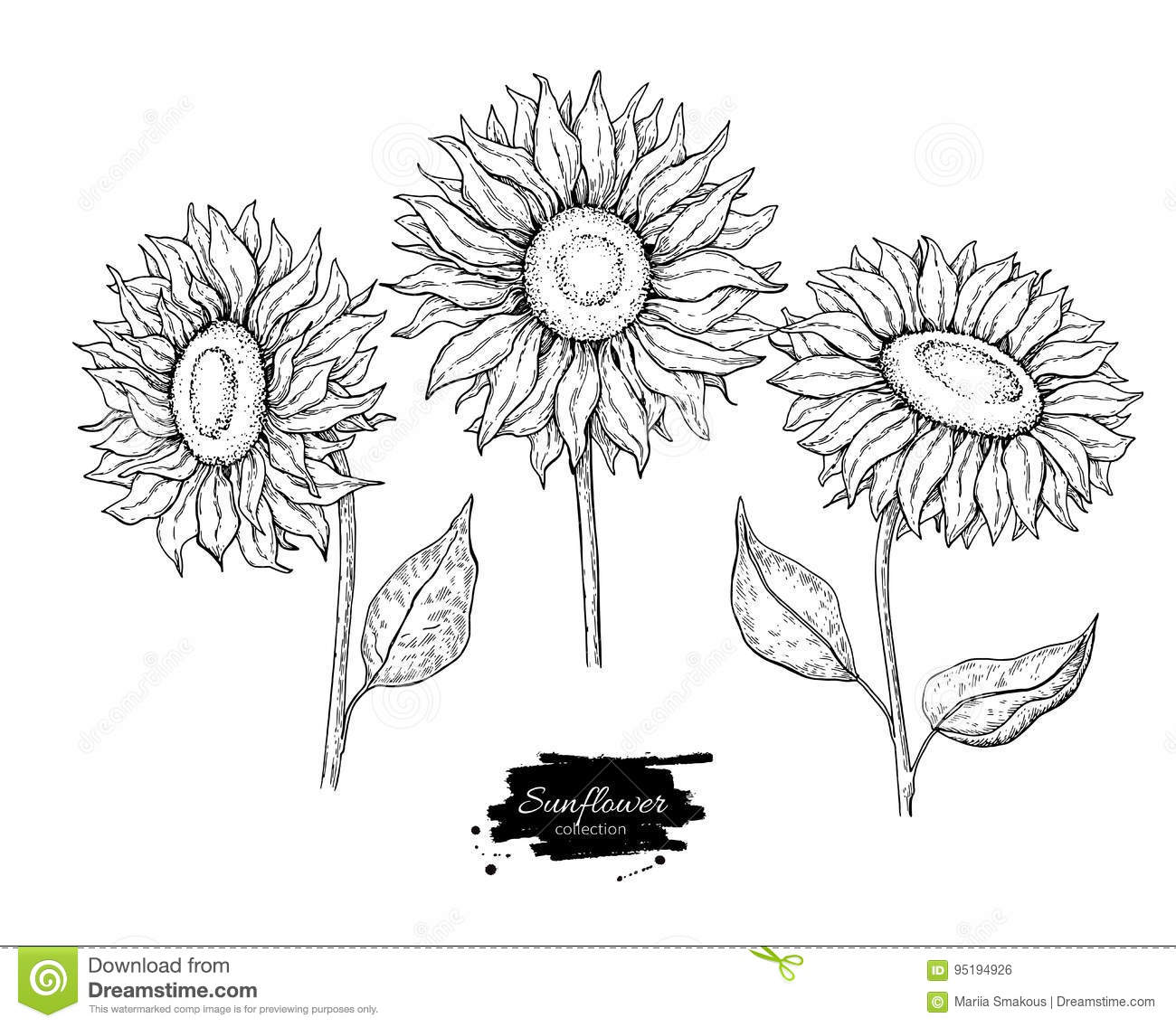 Sunflower Flower Vector Drawing Set. Hand Drawn Illustration ... for Clipart Sunflower Black And White  239wja