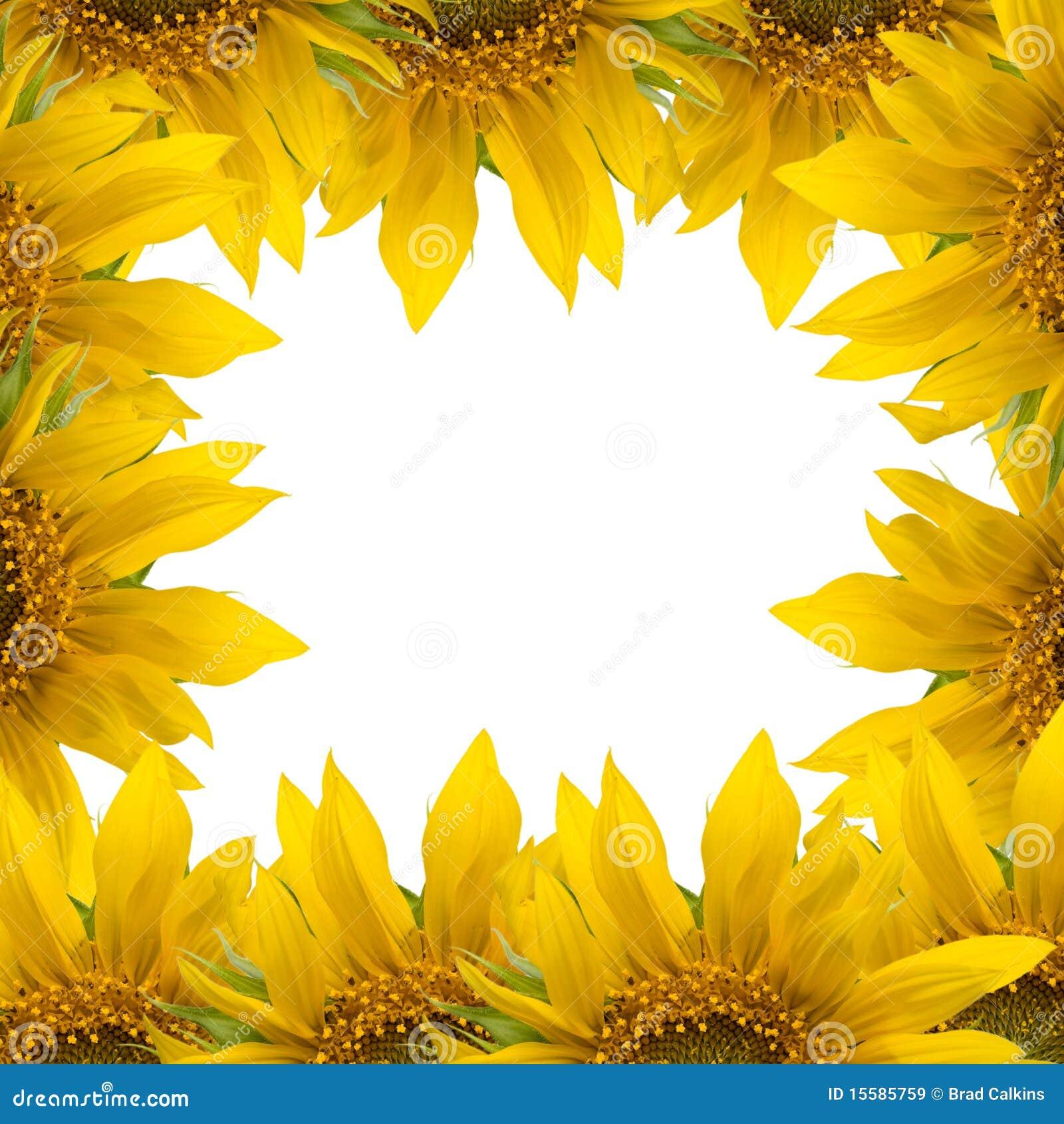 sunflower frame stock photo 15585759 megapixl - Sunflower Picture Frames