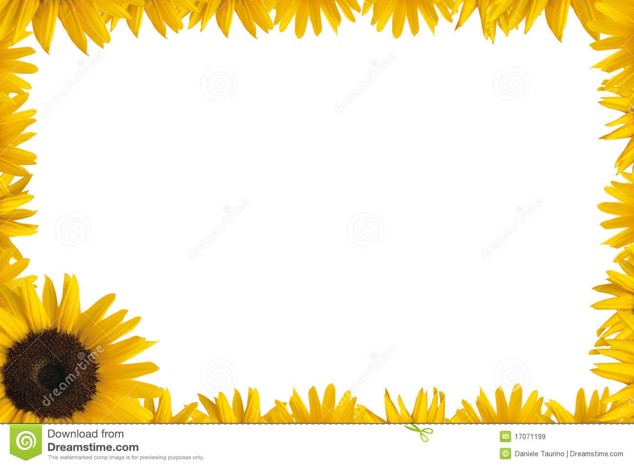 Sunflower frame