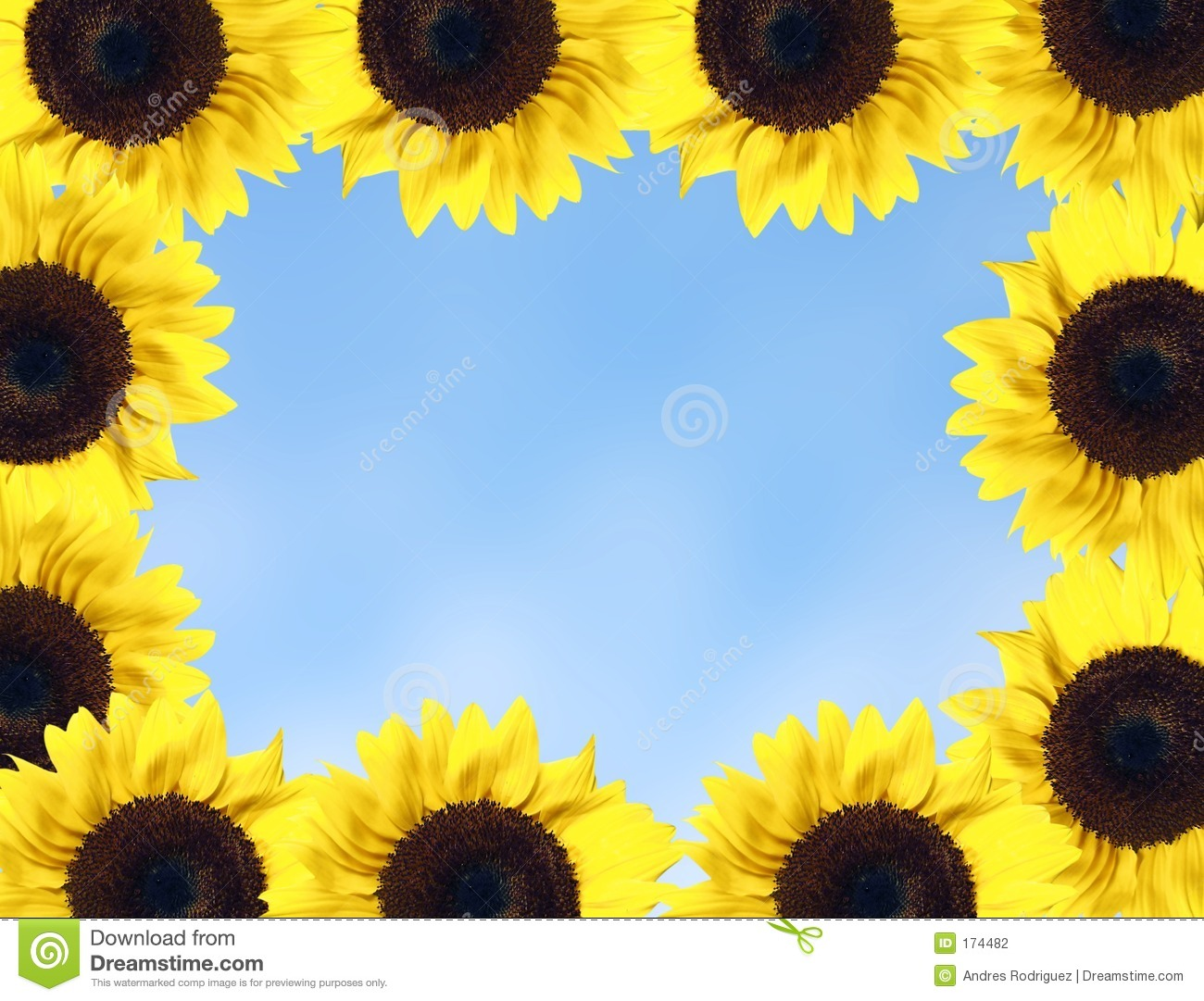 sunflower frame stock photo  image of horticulture