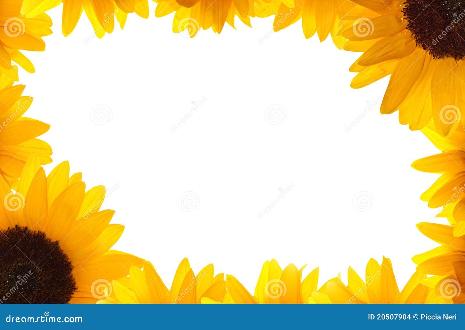 Sunflower frame stock photo. Image of summertime, nature - 20507904